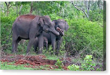Bonding Canvas Print - Asian Elephants With Calf by K Jayaram