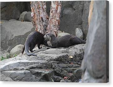 Asian Small Clawed Otter - National Zoo - 01131 Canvas Print by DC Photographer
