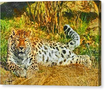 Asian Snow Leopard Canvas Print