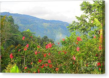 Asiatic Hibiscus Canvas Print by Tina M Wenger