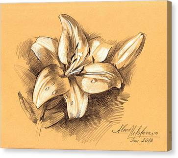 Asiatic Lily Flower With Bud Sketch Canvas Print