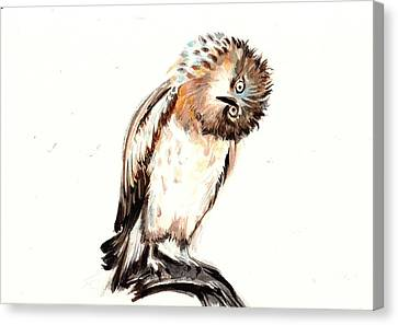Asking Owl Watercolor Canvas Print by Tiberiu Soos