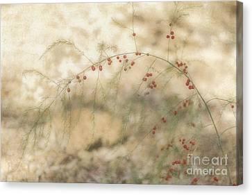 Asparagus Canvas Print by Elaine Teague