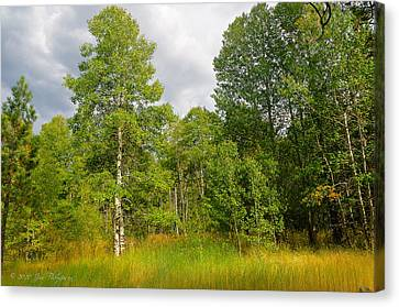 Canvas Print featuring the photograph Aspen And Others by Jim Thompson