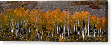 Canvas Print featuring the photograph Aspen Band by Steven Reed