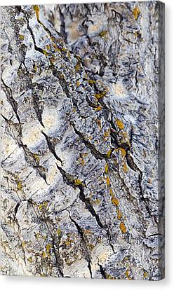 Aspen Bark Canvas Print by Dee Cresswell