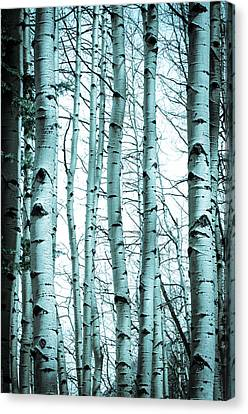 Aspen Blues Canvas Print by Debbie Karnes