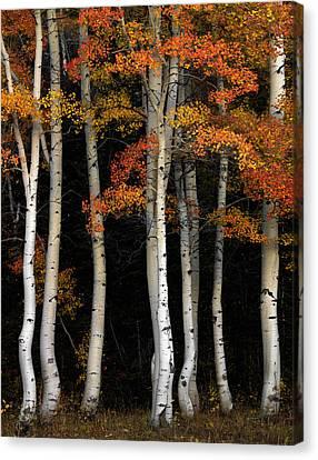 Aspen Contrast Canvas Print by Leland D Howard