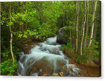Aspen Creek Canvas Print by Darren  White