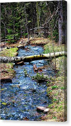 Canvas Print featuring the photograph Aspen Crossing Mountain Stream by Barbara Chichester