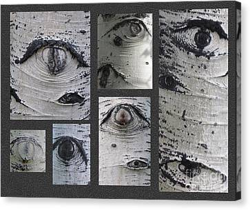 Aspen Eyes Are Watching You Canvas Print