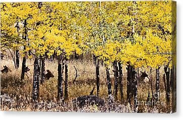 Aspen Grove Afternoon Canvas Print by Catherine Fenner