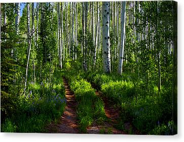 Aspen Lane Canvas Print