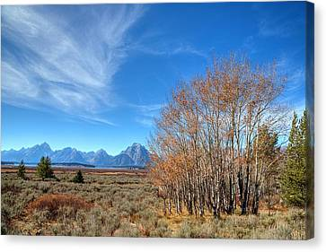 Canvas Print featuring the photograph Aspen Last Stand  by David Andersen