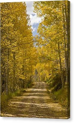 Dolores Canvas Print - Aspen (populus Sp.), Usa by Science Photo Library