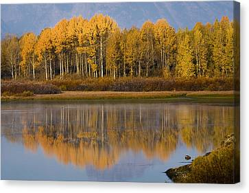Canvas Print featuring the photograph Aspen Reflection by Sonya Lang
