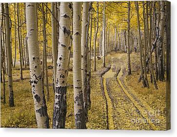 Old Country Roads Canvas Print - Aspen Road, Co by Sean Bagshaw