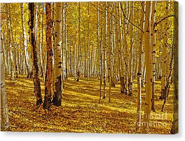 Aspen Sanctuary Canvas Print