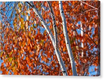 Canvas Print featuring the photograph Aspen by Sebastian Musial