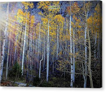Canvas Print featuring the photograph Aspen Sunset by Karen Shackles