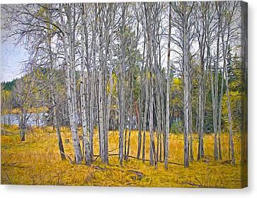 Aspen Tree Grove Digital Oil Painting Canvas Print by Sharon Talson