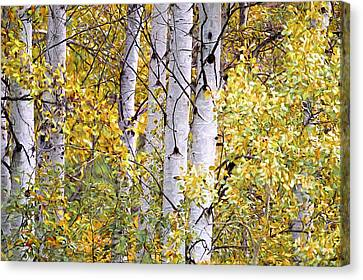 Aspen Trees Digital Artwork Canvas Print by Sharon Talson
