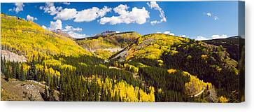 Aspen Trees On A Mountain, San Juan Canvas Print by Panoramic Images