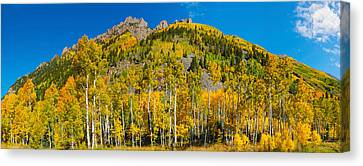 Aspen Trees On Mountain, Ophir Pass Canvas Print by Panoramic Images