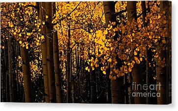 Aspen Woods Canvas Print