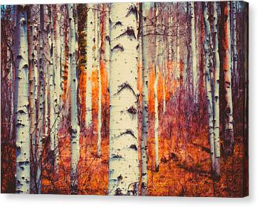 Aspenglow Canvas Print by Roger Chenery