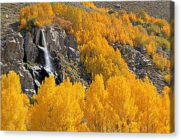 Canon 7d Canvas Print - Aspens And A Waterfall by Donna Kennedy
