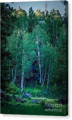Aspens Canvas Print by Arne Hansen