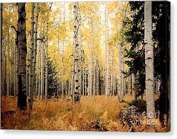 Aspens Canvas Print by Fred Wilson