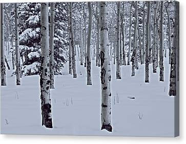 Canvas Print featuring the photograph Aspens In The Snow by Kristal Kraft