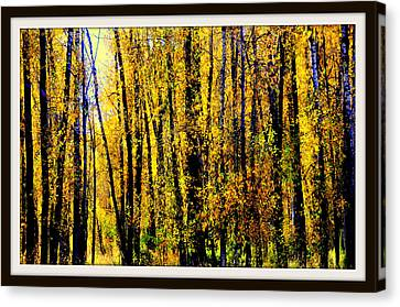 Aspens In Yellowstone National Park Canvas Print by Aron Chervin