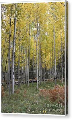Canvas Print featuring the photograph Aspen's Yellow Glow by Ruth Jolly