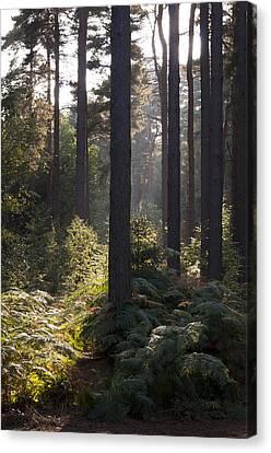 Aspley Woods Canvas Print by David Isaacson