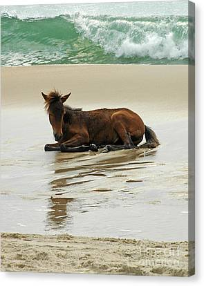 Canvas Print featuring the photograph Assateague Foal by Olivia Hardwicke