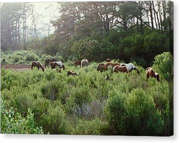 Assateague Herd Canvas Print by Joann Renner