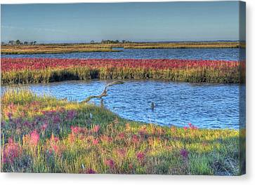 Asseteague Island Salt Marsh Canvas Print