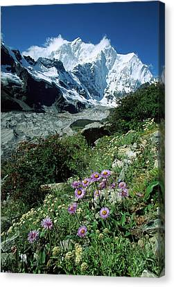 Aster Daisys At Mt. Chomolonzo Canvas Print by Colin Monteath