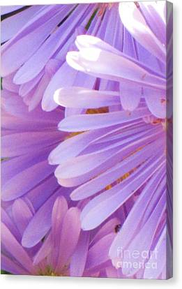 Canvas Print featuring the photograph Aster Petals by Michele Penner