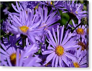Canvas Print featuring the photograph Asters After The Rain by Scott Lyons