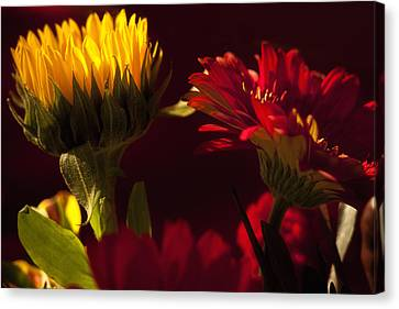 Asters In The Light Canvas Print by Andrew Soundarajan