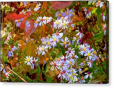 Asters Canvas Print by Ron Jones