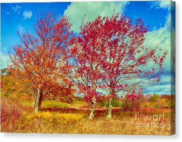 Astonishing Autumn - Fall Colors At Dolly Sods II Canvas Print by Dan Carmichael