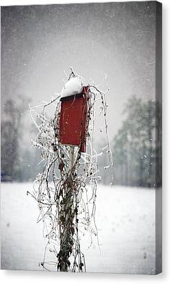 At Home In The Snow Canvas Print by Beverly Stapleton