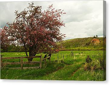 At The Corner Of The Field Canvas Print by Jeff Swan