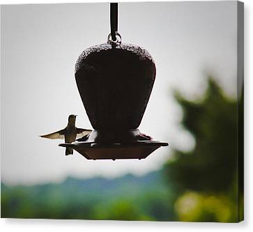 Canvas Print featuring the photograph At The Feeder by Debra Crank