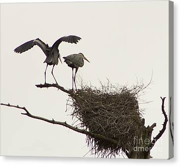 Canvas Print featuring the photograph At The Rookery by Alice Mainville